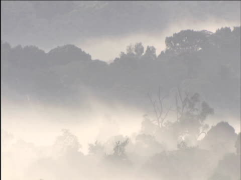 Mist billows through forest at dawn