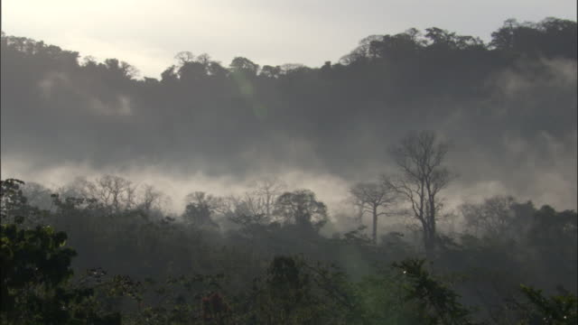 Mist drifts through rainforest, Panama