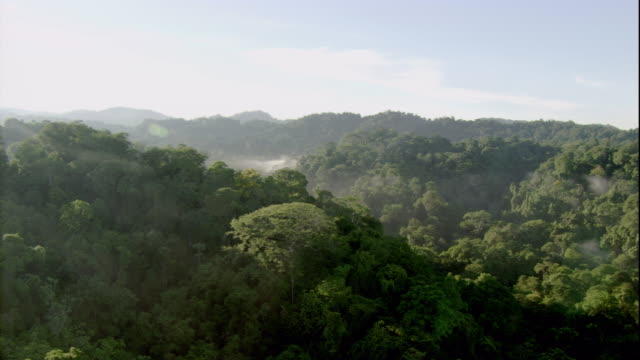 Mist hovers over the rainforest canopy in Costa Rica. Available in HD.