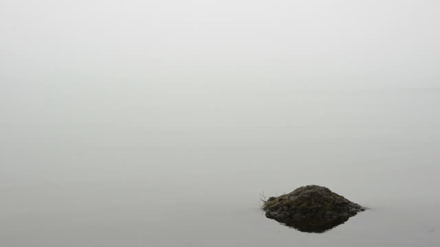 Mist in the lake