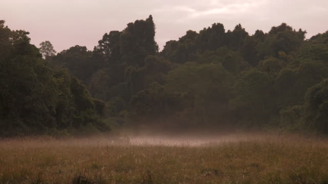 Mist over African Savannah