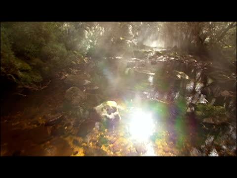 CGI, Mist rising over creek in jungle, shafts of sunlight penetrating foliage