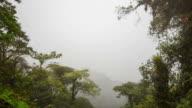 Misty cloudforest in the foothills of the Andes in Cordillera de los Guacamayos, Ecuador