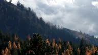 Misty clouds rising off golden tree covered mountainside.
