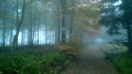 Misty fog forest.