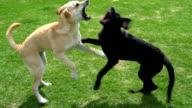 Mischlingshunde spielen im park