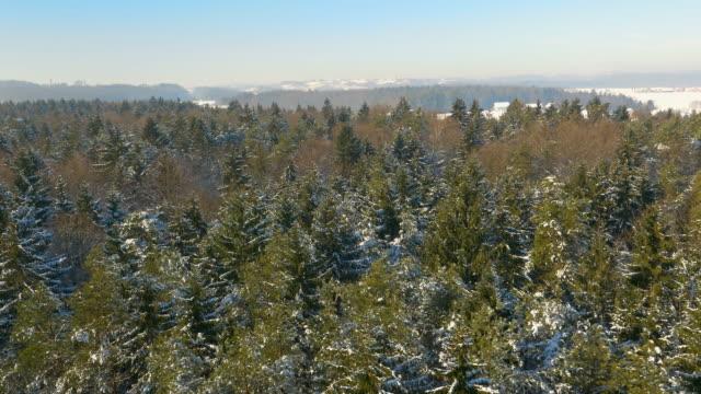 Luchtfoto gemengd bos in de winter