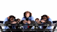 Mobile Phone Monkey Group