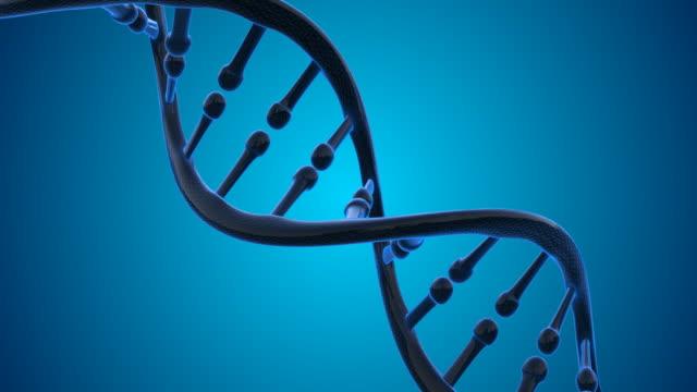 4K DNA Molecule - Loopable