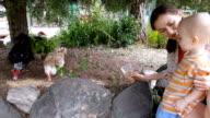 Moeder en baby voederen van eenden