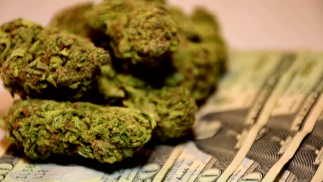 Money Grows on Trees 20 Dollar Bill Currency Healthcare Legalization Recreational Cannabis Tax