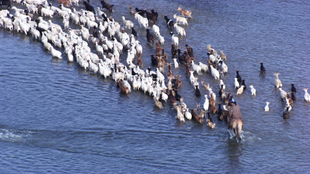 Mongolia : Herds of horses next to the river