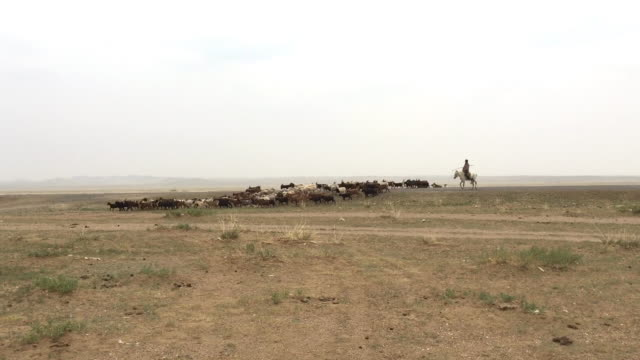 Mongolian shepherd riding a horse with his herd of sheep and goats in Gobi desert, Mongolia