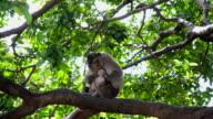 Monkey behavior