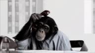 Monkey Business-Büro