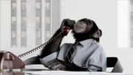 Monkey Business Office