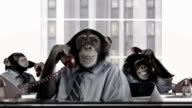Monkey Business-Service