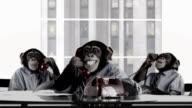 Scimmia Business Team