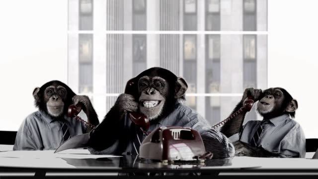 Monkey Business Team