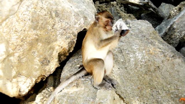 Monkey Drinking Coke