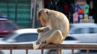Monkey äta frukt i staden, Lop Buri, Thailand