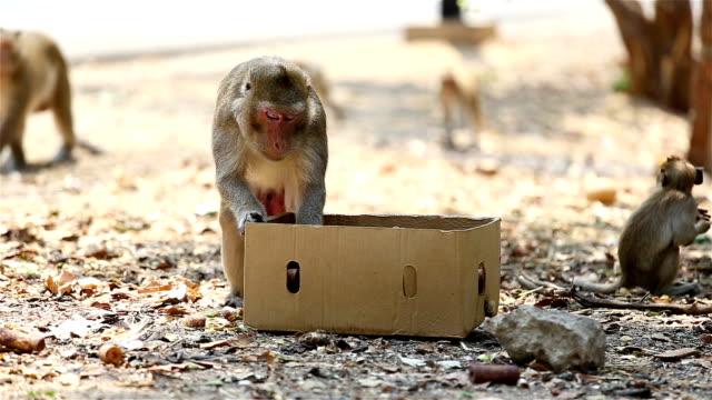 Scimmia mangiare