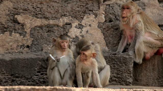 Famiglia scimmia nel Tempio Thai in Tailandia