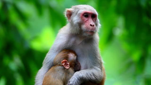 Famiglia scimmia