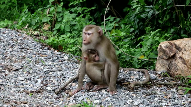monkey family wildlife