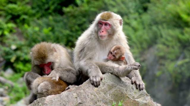 Scimmia in Spa Giappone