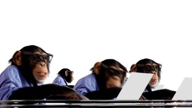 Monkey Network Team
