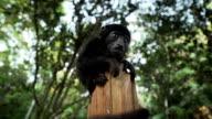 Monkey on a trunk
