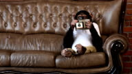 Scimmia foto divano