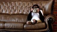 Monkey-Sofa
