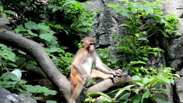 Monkey sitting on a tree trunk
