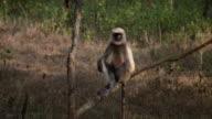 A Monkey sitting on a Tree