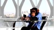 Monkey Smart Phone Los Angeles Office