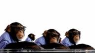 Scimmia Team conversazione