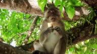 Monkey (HD 1080)