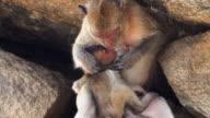 Scimmia con bambino