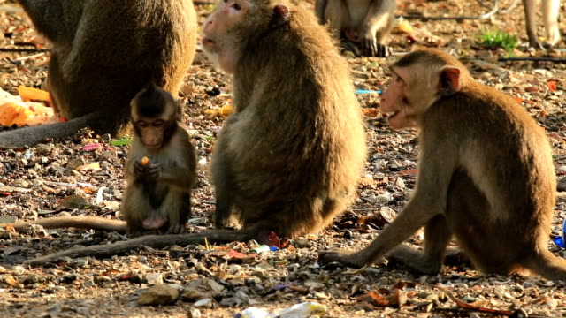 WS:Monkeys and families