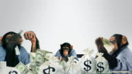 Monkeys eating Cash