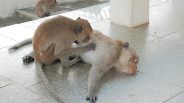 Monkey's Grooming