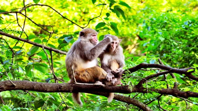 Scimmie guardai in giro in una struttura ad albero.