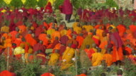 ZO, MS, Monks gathering at Mahabodhi Temple, Bodh Gaya, Bihar, India