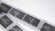 Monochrome film negatives and lupe magnifier on a light box.