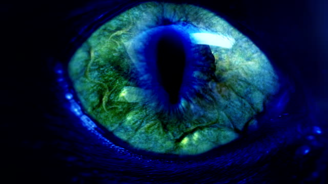 Monster Eye Stock Footage Video | Getty Images