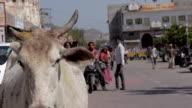 Montage: Indien Holi Feiern in Rajastan