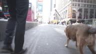 4 K montaggio-giovane uomo e cane in Time Square New York