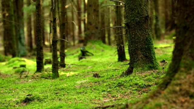 Moody Forest Scene Close-up